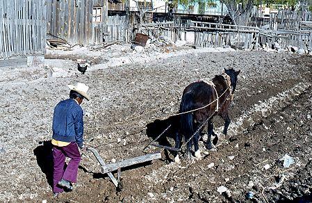 Horse-drawn plough, Creel, Chihuahua, 1980