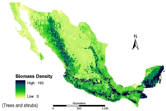 Biomass production in Mexico (Trees and bushes)