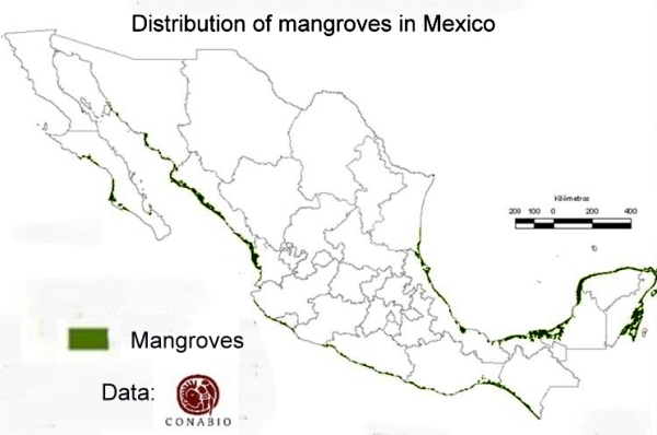 Map of distribution of mangroves in Mexico