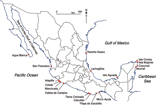 Selected marine turtle nesting beaches in Mexico.