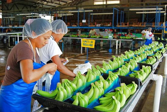 Banana packing plant. Credit: Sagarpa.