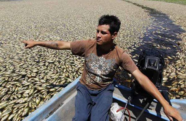 Local fisherman sees his livelihood disappear. Credit: Vanguardia
