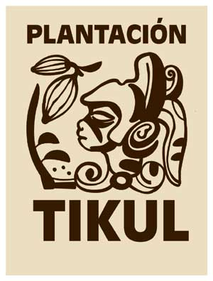 The tikul plantation cacao project near mrida geo mexico the that cacao plantation begun in 2008 by belgian firm belcolade already has 10 hectares of land planted with 10000 cacao trees planting density of 1000 sciox Image collections
